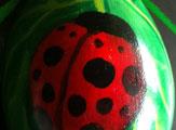 A Lady's Bug